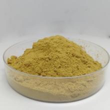 Eurycoma longifolia Extrakt Tongkat Ali Pulver