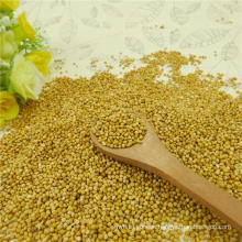 2012 Hot sale yellow millet in husk Glutinous