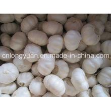 Alho branco chinês com boa qualidade
