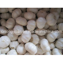 Chinese White Garlic with Good Quality