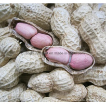 2020 New Crop Factory High Quality Peanut in Shell