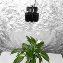 LED COB CREE CXB3590 Grow Light