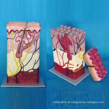Menschliche Haut Medizinische Anatomie Modell für die Lehre (R160101)