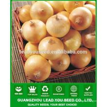 NON01 Aihuang híbrido cebolla semillas precio, semillas de cebolla para la venta