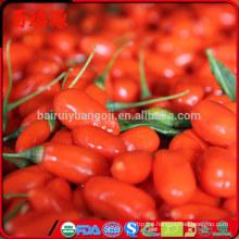 Goji raspberry goji products vendita piante di goji