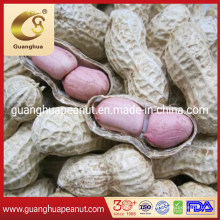 Jumbo Groundnut Kernels with Export Quality