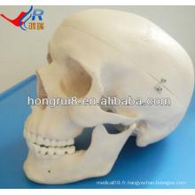 Modèle de crâne humain avancé de taille de vie ISO, crâne anatomique