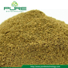 Bulk Cassia Seed Extract Pulver med 5% Emodin