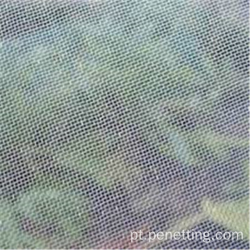 0.8mm × 0.8mm Mesh Anti Fly Netting