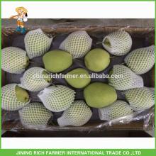 De boa qualidade Pera Shandong fresco