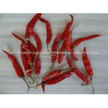 12no.chilli supplier from india