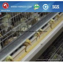 Geflügel Bauernhof Ausrüstung H Typ Broiler Hühnerstall