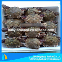 price of 150-300g first rate frozen whole round blue swimming crab