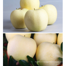 Chine Golden Delicious Fresh Red Apple