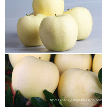 China Golden Delicious Fresh Red Apple
