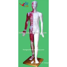 Mannequin vif d'acupuncture humaine de 178 cm