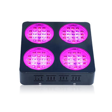 High Puissance Puissance LED Grow Light