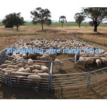 Panneau de jardin de moutons lourds Durty à vendre (avec ISO9001 et SGS)