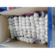 Чистый белый чеснок 6p 5.5cm