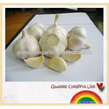 normal white garlic in mesh bag