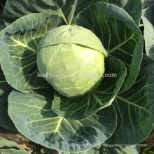 С11 Хунмэй ранней зрелости от 60 до 70 дней гибридной семена капусты