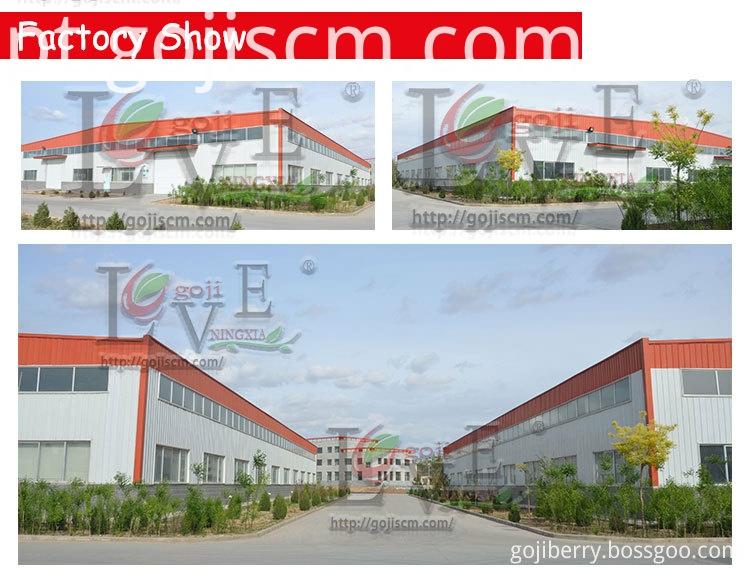 Dried Goji Berry Hot Sale factory show