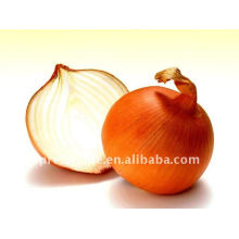 Low price Fresh Red Onion from china