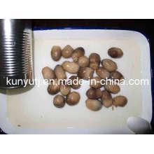 Champignons en paille en conserve avec haute qualité