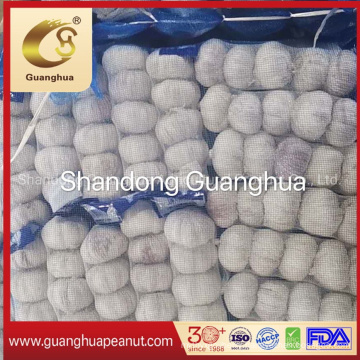 Export Quality Fresh Garlic with Factory Price