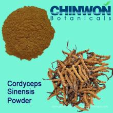 Intensificador de Imunidade Cordyceps Sinensis Powder