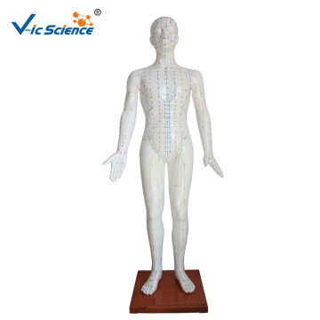 178CM Human Acupuncture Model