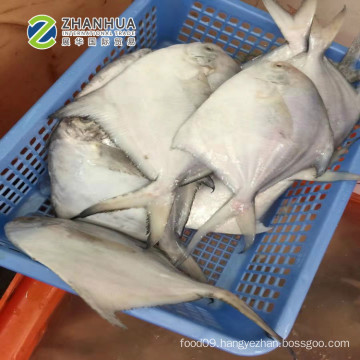 White Pomfret Fish Size 50-70g,80-100g Frozen Style and Fish Product Type frozen white pomfret fish