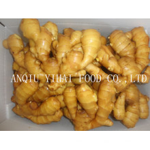 Top Quality Fresh Ginger with Best Price