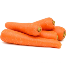 Best Price Carrots For Wholesale Export Chinese Natural Fresh Carrots