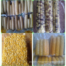 FROZEN YELLOW SWEET CORN