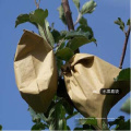 to Decrease The Hurts of Birds Bite Sterility Non-Pollution All-Wood Pulp Paper Cultivation Grow Bags for Apple Popular in Sri Lanka
