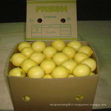 Qualité exportée du citron frais chinois /