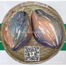 PU15 Xiangyu großer Geschmack überlegene hybride süße Kürbiskerne für das Pflanzen