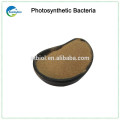 Feed Additive Photosynthetic Bacteria Supplier