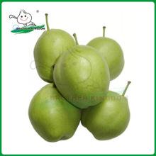Nova safra su pear / pear / fresh