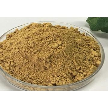 Pharmaceutical API Green Tea Extract oral solution