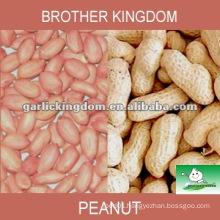 red skin peanut kerels