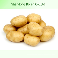 Chinese High Quality Fresh Potato