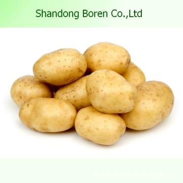Chinese High Quality Fresh Potato