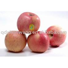 Yanti délicieuse pomme Fuji pour une grande quantité