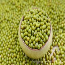 Green Mung Beans da China Origem