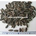 Acmefate precio a granel de las semillas de girasol a rayas al por mayor de China