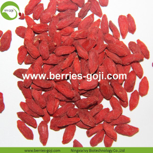 Nouvelle arrivée Super Food Dried Wolfberry Goji