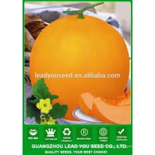 NSM22 Laoyin Chinse fábrica de sementes de melão doce, sementes para o plantio
