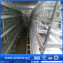 De boa qualidade Chicken Cage Products in Anping